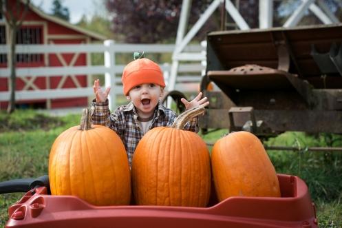 pumpkinpatch43